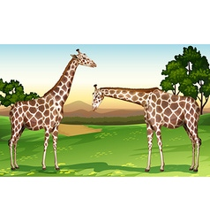 Two giraffes in the field vector image