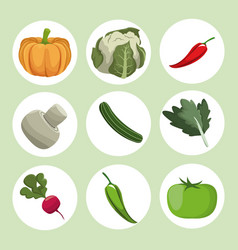 Collection vegetables fresh ingredients vector