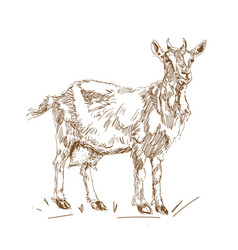 in vintage style goats in vector image
