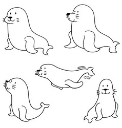 set of sea lion vector image