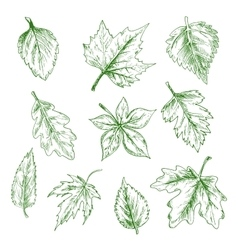 Sketched isolated green tree leaves vector
