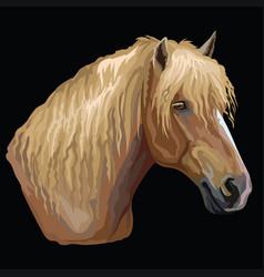 Colorful horse portrait-2 vector