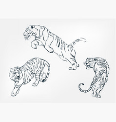 japanese chinese design set tiger sketch vector image