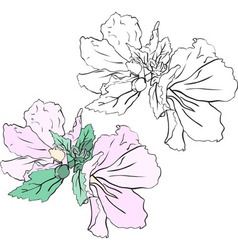 Beautiful flowers mallow stencil and color variant vector image