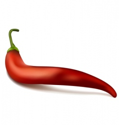 red chili pepper vector image vector image