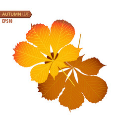 autumn nut leaf isolated on a white background vector image