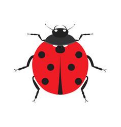 Cute ladybug insect beetle vector