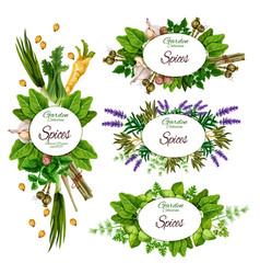 Herbs spices and organic farm herbal seasonings vector