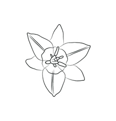 iris flower simple black lined icon on white vector image