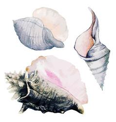 Set three watercolor sea shells full color vector