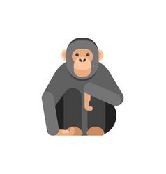 flat style of monkey vector image vector image