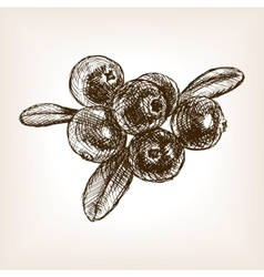 Cranberry berry fruit hand drawn sketch vector image
