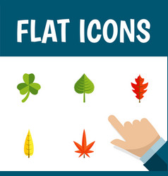 Flat icon foliage set of leaf frond hickory and vector