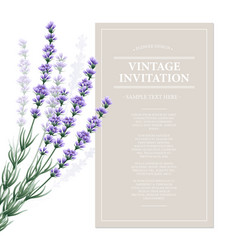 Vintage card with lavender flowers vector