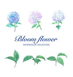 Bloom flower watercolor design hydrangea and vector
