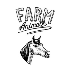 farm animal head of a domestic horse logo or vector image