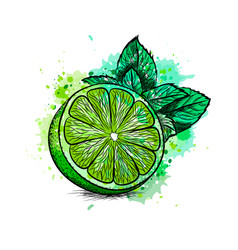 Fresh lime with leaves and mint vector