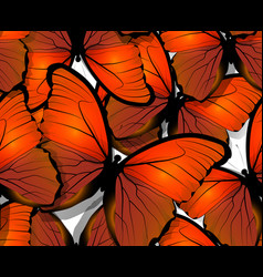 seamless butterfly pattern wings on white vector image