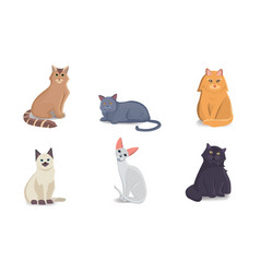 Collection cats of different breeds vector