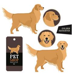 Dog breeds set golden retriever vector