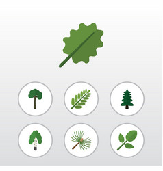 Flat icon bio set alder leaves evergreen and vector