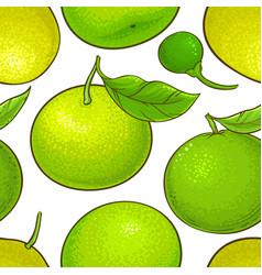 Green mandarin fruit vector