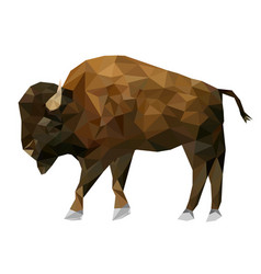 Isolated low poly bison and reflection with white vector