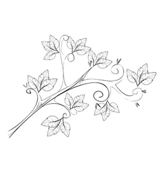 sketch plant leaves icon graphic vector image