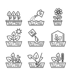 plant growing line icons greenhouse vector image