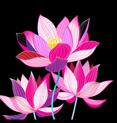 Magnificent of beautiful lotuses vector