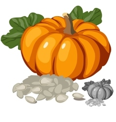 Ripe pumpkin and its seeds vegetables vector image