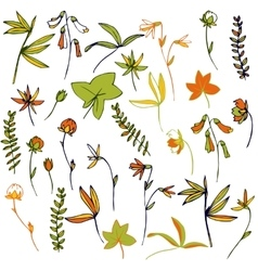 Flowers leaves and plants vector