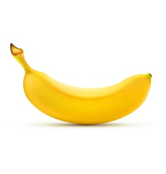 yellow banana vector image