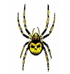 spider with skull on the body vector image vector image