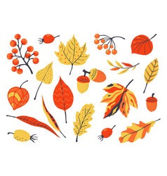 autumn leaves decoration hand drawn elements for vector image