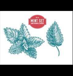 collection of hand drawn pastel mint vector image