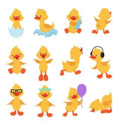 Cute chicks cartoon yellow ducks baby duck vector