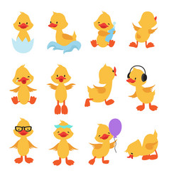 cute chicks cartoon yellow ducks baduck vector image