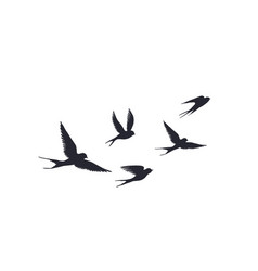 flying birds silhouette on white background vector image