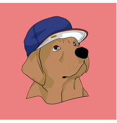 labrador retriever dog with cool cap vector image