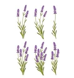 Lavender background vector