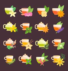 set flat icons herbal tea vector image