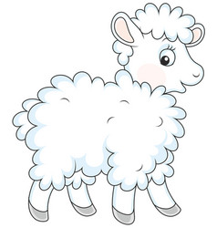 white curly sheep vector image