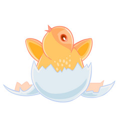 cute small yellow chicken hatched from an egg and vector image vector image