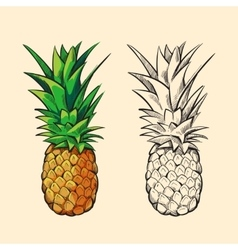 Outline pineapple and color cartoon vector image vector image