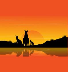 at sunset kangaroo scenery silhouettes vector image