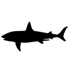 basking shark vector image