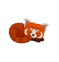 Chinese red panda sleeping cute fluffy wild vector