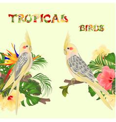seamless border tropical birds yellow cockatiels vector image
