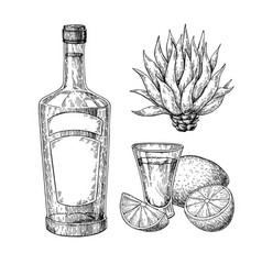 tequila bottle blue agave and shot glass vector image